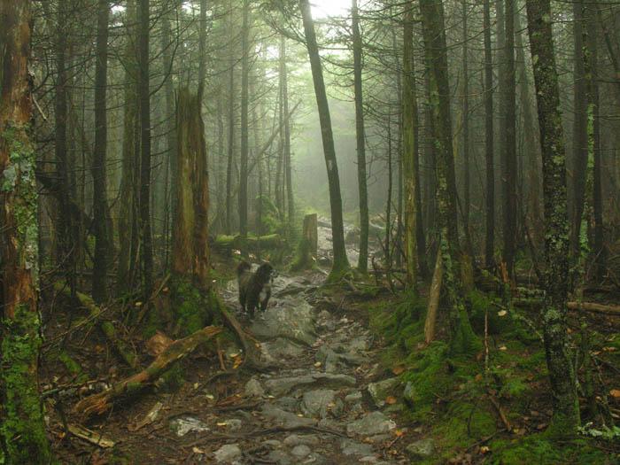 Monroe Fogline, Long Trail, Vermont 9/30/08